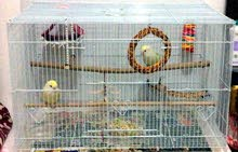 Bird medium sized cage for sale