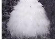 فستان زواج من كوريا