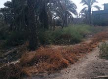 ابو خصيب مهيجران قرب حسينيه العاشور
