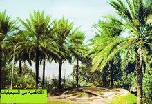 ارض زراعيه في منطقة التاجي قرب مدينة الكاظميه المقدسه المساحه 75م نزال اسواق فدك