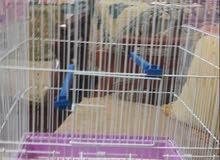 قفص طيور كبير للبيع مع 2 ستاند وعلبة للأكل