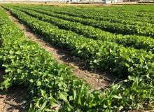 للبيع أرض زراعيه مسجله من المالك مباشرة