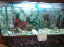 حوض أسماك الزينة كبير