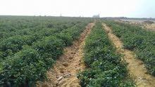 امتلك ارض زراعيه قابله للتجزئه باقل سعر للفدان