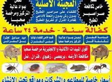 مكافحة حشرات وقوارض خدمه 24ساعه استخدام اقوالمبيدات الفعاله دقه في المواعيد