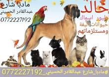 متجر خالد الطيور وسماك والحيوانات الاليفه