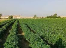 قطعة ارض زراعيه كاملة المرافق وقابله للتجزئه