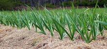للجادين في مجال الزراعة 50 فدان استثماري كامل المرافق وقابل للتجزئه