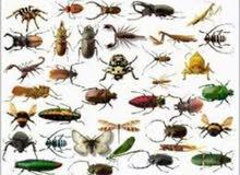 مكافحة الحشرات والقوارض بأقل الاسعار