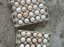 بيض للاكل