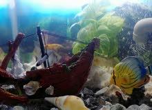 حوض سمك كامل مع السمك ماله