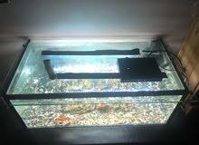 Fish Aquarium ..gallon…18