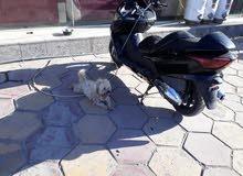 كلب زينه للبيع السعر 150 الف