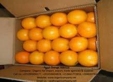 برتقال فالنسيا مصري