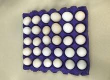 بيع بيض