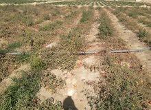 مزرعه للبيع بطريق اسيوط الغربي 50ك من الهرم واكتوبر