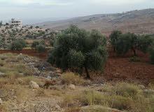 عشرة دونم بمنطقة نادره مشجرة زيتون واصل جميع الخدمات