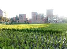 قيراط ارض خلف عمارات المحافظة بالاستاد طنطا