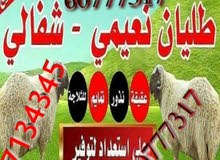 عربي نعيمي مع التوصيل لباب المنزل مجانا 60777317