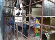 مطير حمام حديد شبك تفصيل اربع جهات والسقف زينكو مع. (7جواز حمام 6بلديوواحد قرقاط