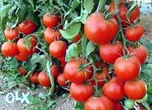 20فدان زراعيه واستثماري وقابله للتجزئه وحتي 5 فدان والري نيلي