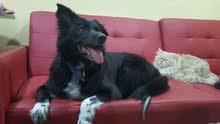 كلب أنثى للتبني الحر