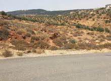 ارض في جرش 1250 م