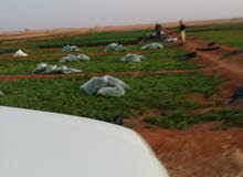 مزارع خضار وفواكه