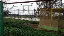 مزرعه 6 هكتار