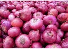 Onion (Imported from India) بصل (مستورد من الهند)