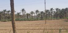 للبيع مزرعة مثالية عملاقة في مصر