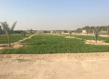 للبيع مزرعه 12.5 جاهزه بالعبدلي موقع زاويه