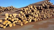 مطلوب مدير تنفيذي لمصنع اعمال خشبية