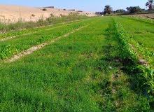 ارض زراعيه للبيع اول طريق العلمين