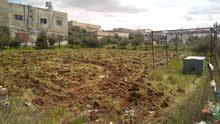 قطعة أرض في لواء القصر _ الكرك للبيع