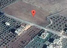 ارض للبيع هام اربد  / 5 دونم 321 متر ماشاء الله جميع الخدمات وصلة مياء وكهرباء