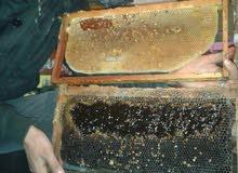 عسل الخروب من النوع الجيد من جبال اﻷطلس