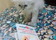 عيادة عناية الحيوان التخصصية