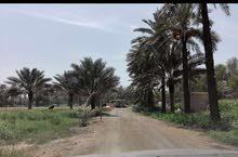 مزرعة 20500 متر صحم ديل ال عبدالسلام مسوره مزروعه ماء ملغ