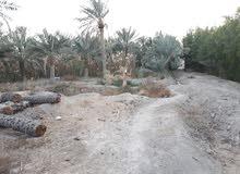 بستان في ابو الخصيب في منطقه كوت فريح