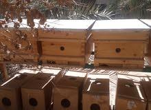 انشاء مناحل وبيع خلايا النحل وفرز العسل بالكويت 50733026