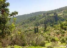 للاستثمار في الأردن... أرض في عجلون.. عين جنا... تصلح لبناء فيلا أو شاليهات أو استراحة