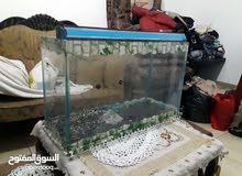 حوض سمك متر +فلتر حجم كبير +دفايه مياه +زينه حوض +مضخه هواء