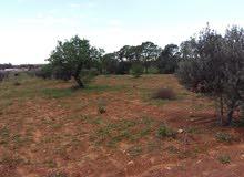 قطعة أرض للبيع بترهونة