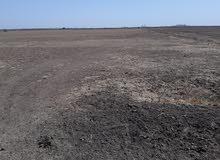 للإيجار 10 فدان زراعية في الجدايد الباقير، تاني قطعة من الزلط