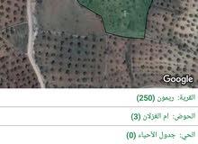 مزرعه مميزه في كروم الغزلان قريبه من غابات دبين