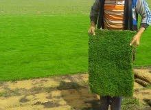 نجيل طبيعي وتنسيق الحدائق