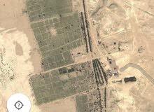 ارض زراعية او مزرعة كبيرة للإيجار او الإستثمار