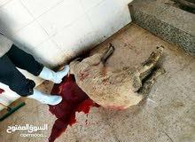 جزار لحام لذبح الاضاحي متنقل في اربد وضواحيها
