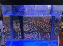 حوض سمك صغير الحجم
